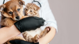 Veterinarian in black gloves with a dog and a cat in his hands